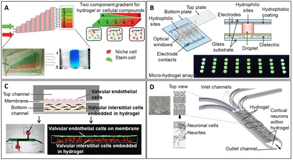 Recent Advances Of Biologically Inspired 3d Microfluidic