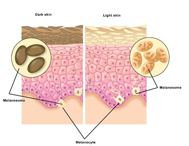 Skin, Light and their Interactions, an In-Depth Review for Modern Light-Based Skin Therapies
