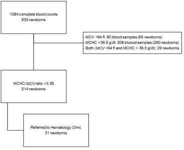 Valorization of Erythrocyte Indices in the Neonatal Period - A Pilot Study